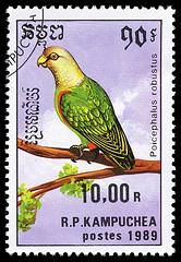 stamp Poicephalus3