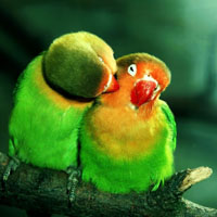 Jigsaw Lovebirds 200px
