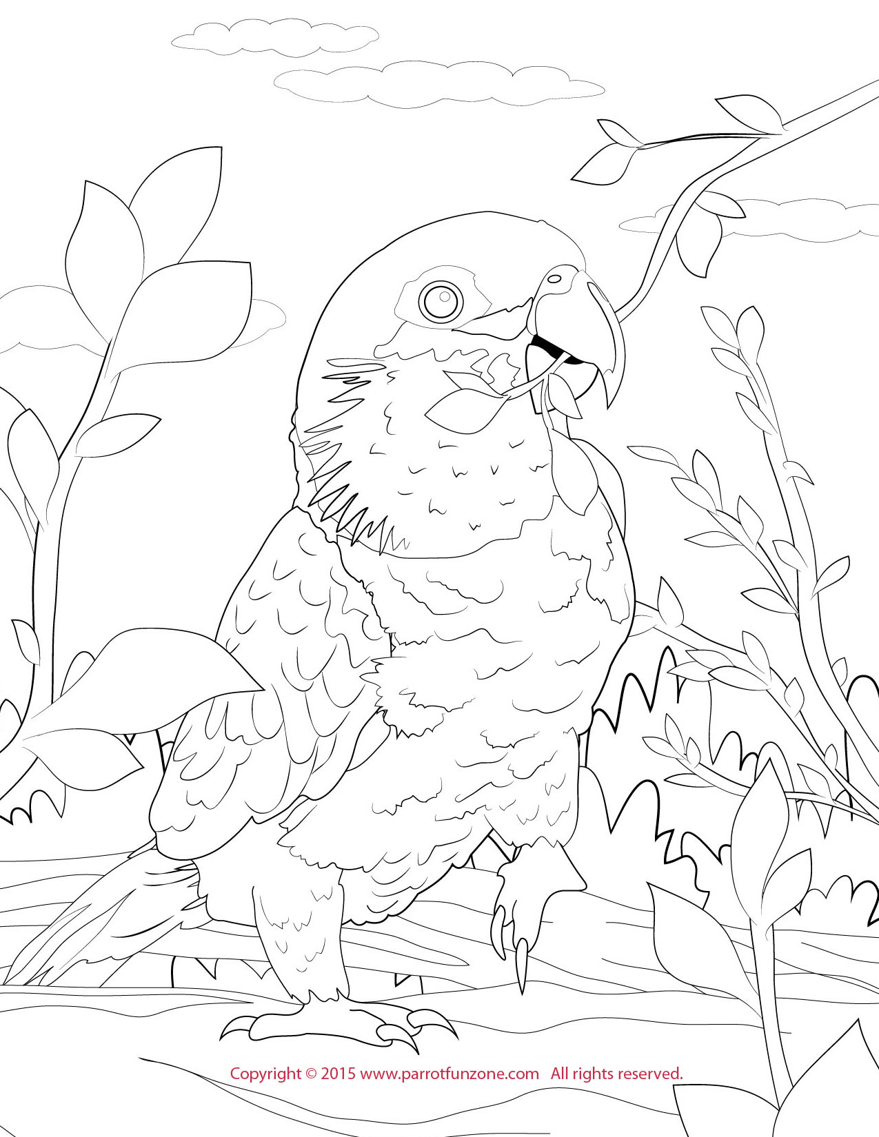 black headed caique coloring page