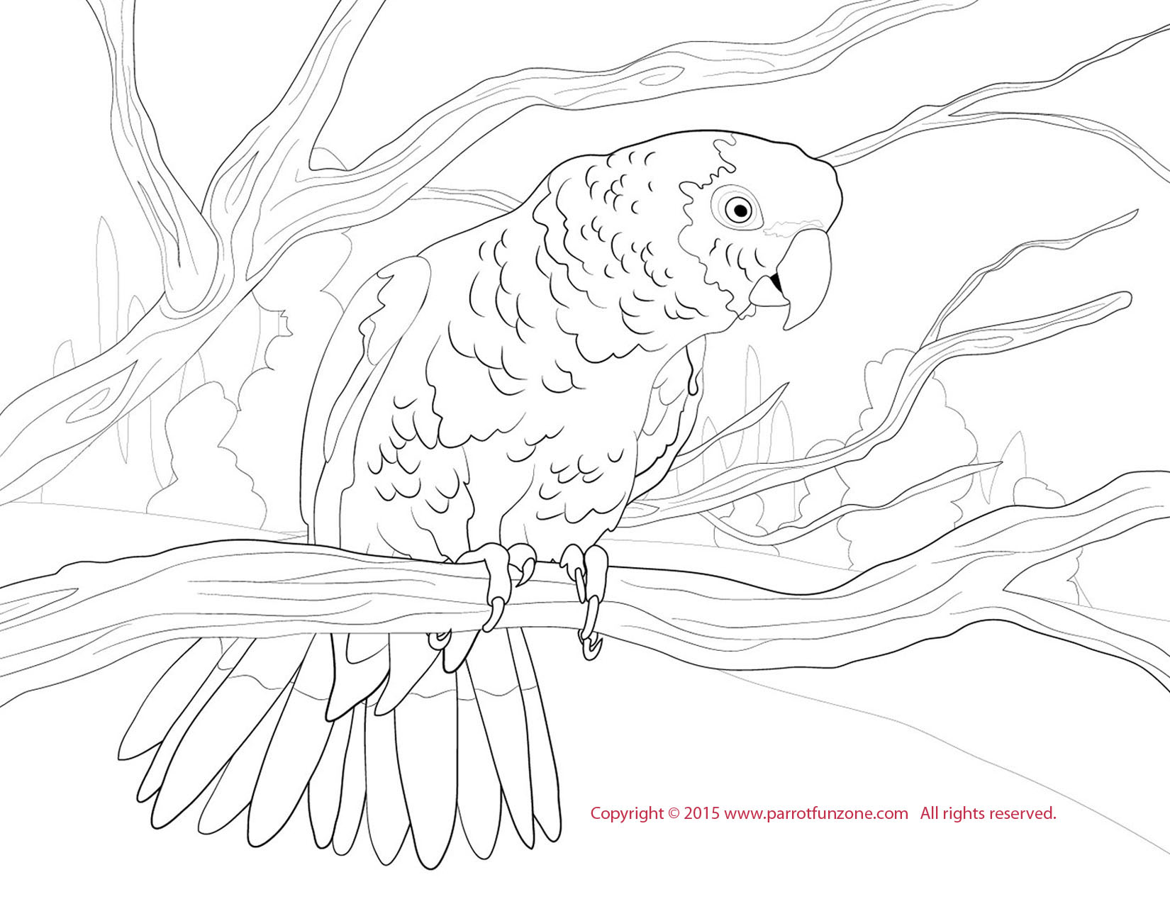 double yellow amazon coloring page