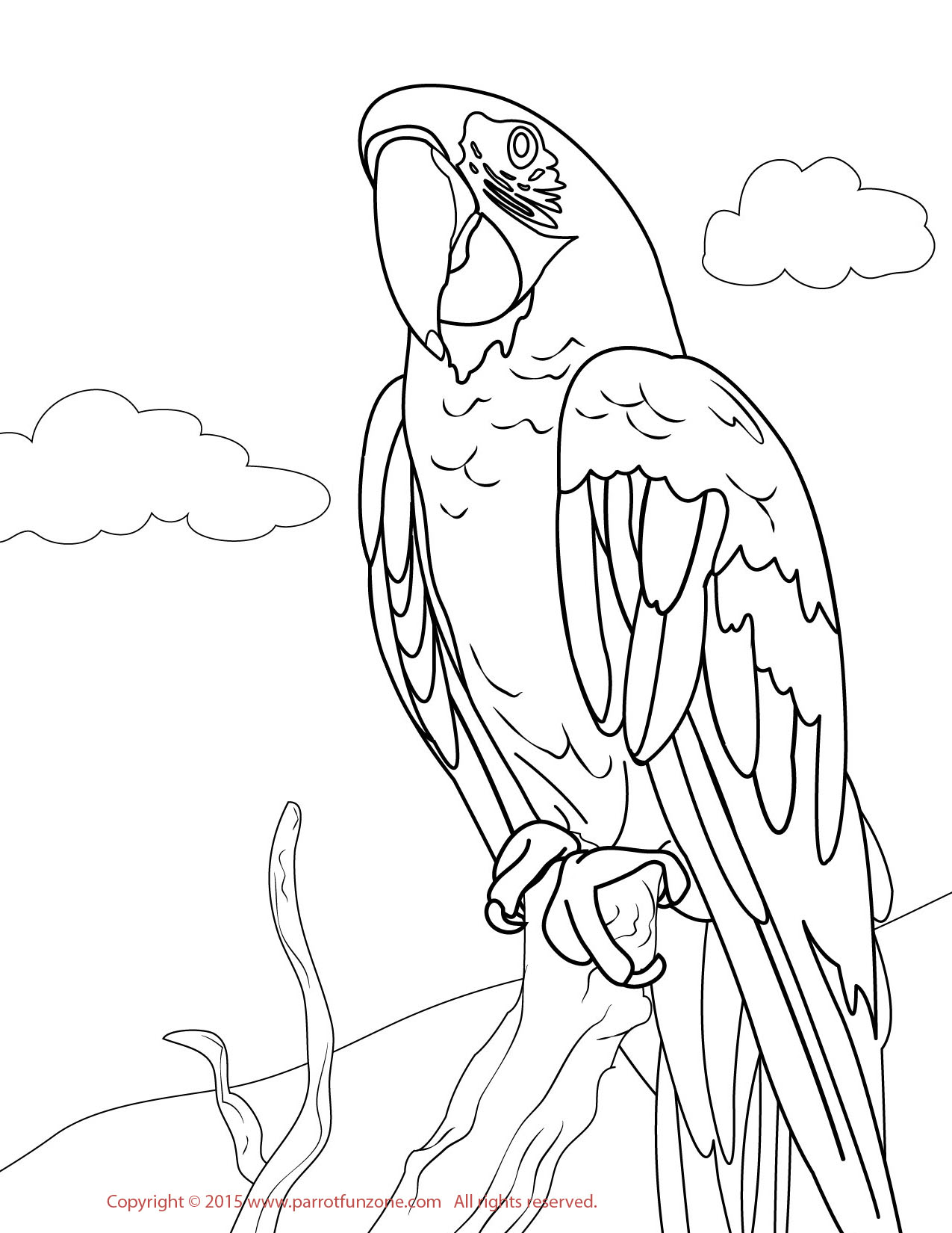 Scarlet macaw coloring page murderthestout for Coloring pages parrot