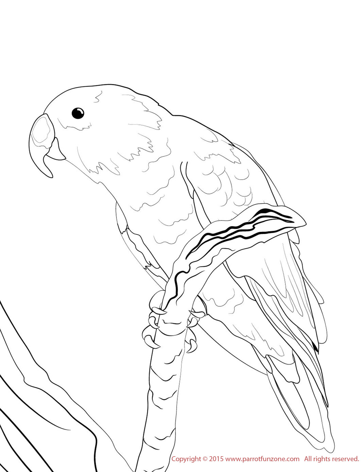 male eclectus coloring page