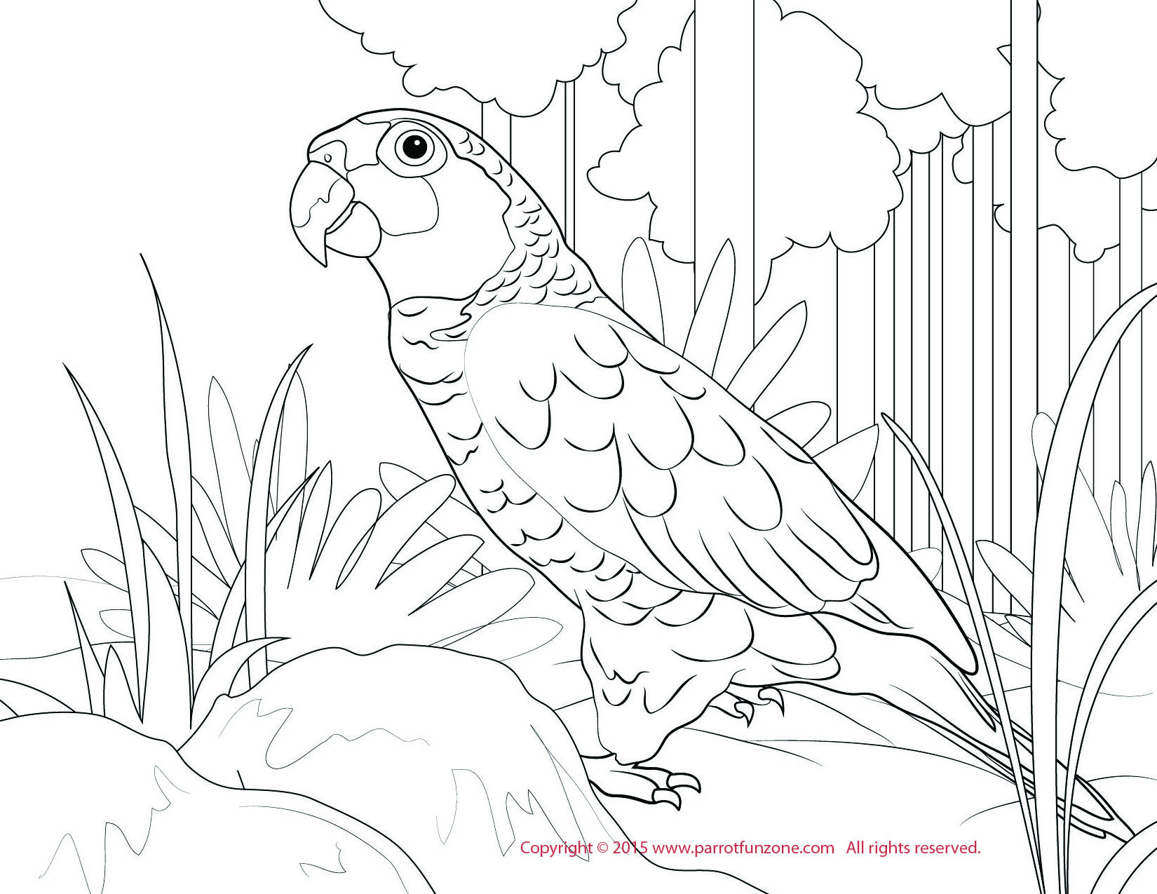 red lored amazon coloring page