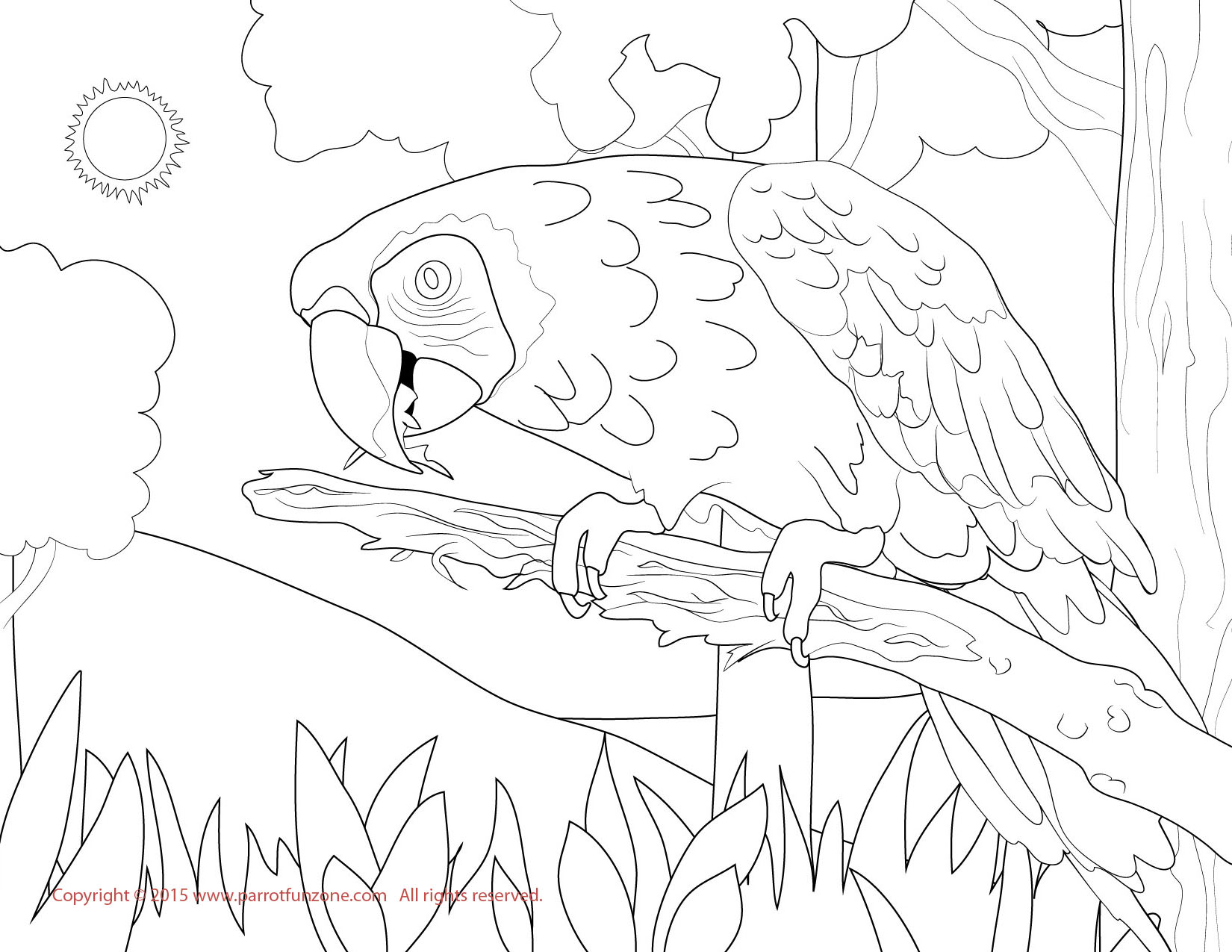 Adult Cute Scarlet Macaw Coloring Page Images best scarlet macaw coloring page images