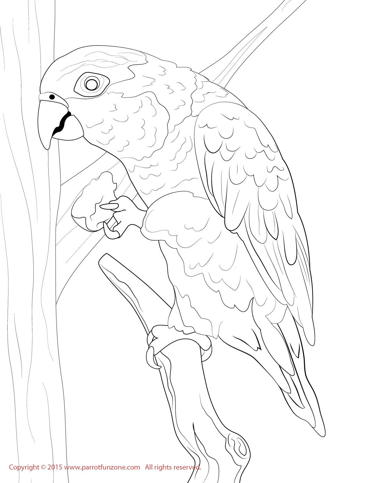 white bellied caique coloring page